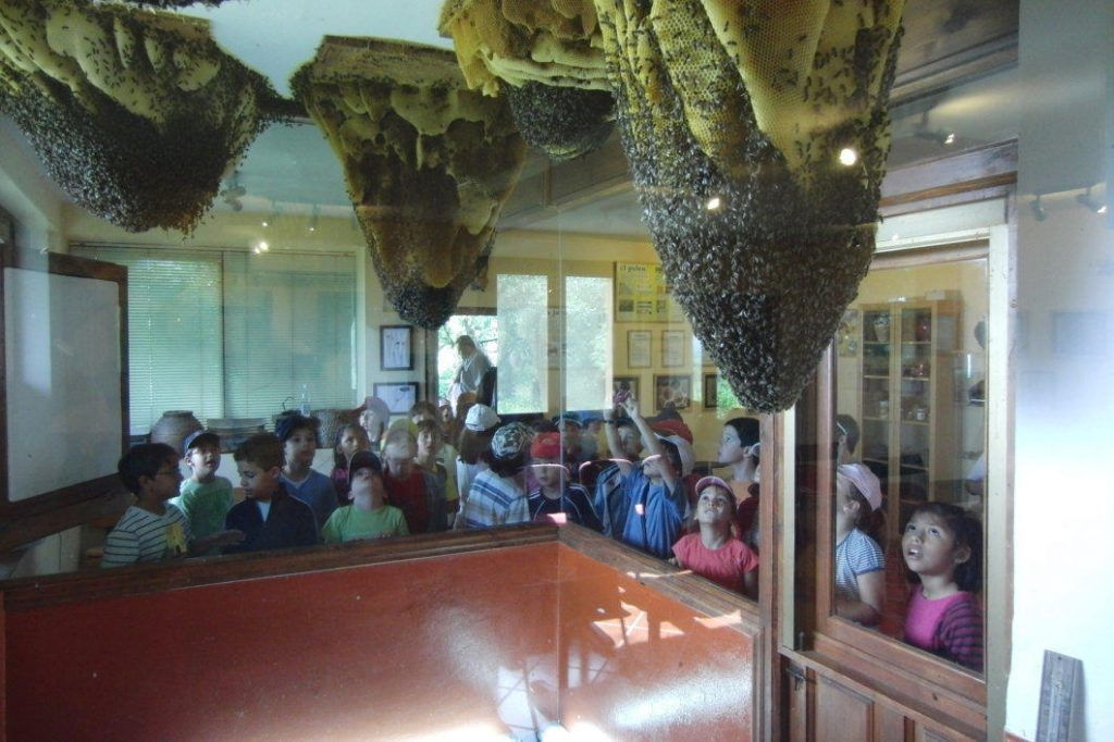 aula museo abejas del valle